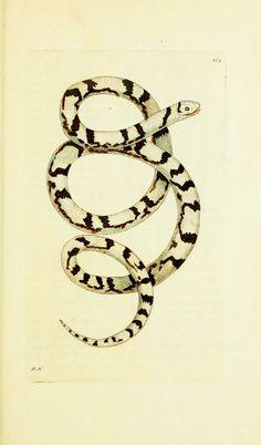 Scientific Illustration | wapiti3:    The naturalists' miscellany : or...