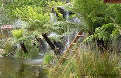 Detail of our #rhschelsea best in show garden #flowershow #australian #garden