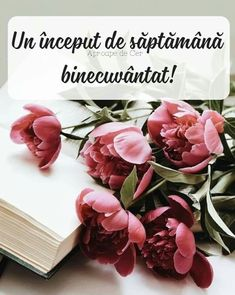Jesus Loves You, God Jesus, Good Morning, Plants, Gifts, Travel, Bible, Quotes, Buen Dia