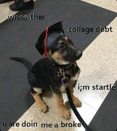 obedanc diploma doin me a fail