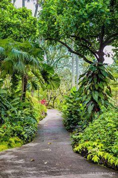 Singapore Botanical Gardens - 1 Cluny Rd, Singapore 259569 - sbg.org.sg +65 6471…