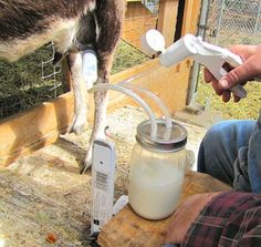 The Original Henry Milker Makes Life Easier for Dairy Goat Farmers by Alan Harman. Presenting information, ideas, and insights for everyone who raises, manages, or just loves goats. Cabras Boer, Goat House, Goat Barn, Nigerian Dwarf Goats, Raising Goats, Farm Projects, Mini Farm, Goat Farming, Baby Goats