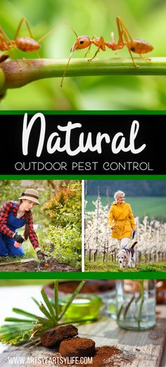 Tips and ideas for how to control ants, fleas, mosquitos and other pests in your yard. All natural solutions to keep your family, pets and house safe from insects! Using Essential Oils, Borax, Coffee Grounds and spices, you can help keep your home bug free.