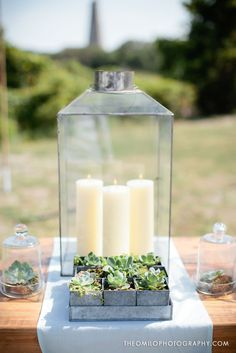 Photo via Project Wedding / thin glass lantern and succulents