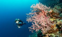Scuba diving trips around the world: readers' tips | Travel | The Guardian