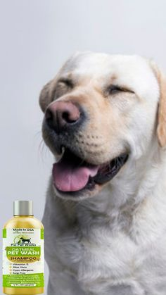 Oatmeal Shampoo, Dog Shampoo, Shampoo And Conditioner, Big Dogs, Small Dogs, Funny Dogs, Cute Dogs, It Works, Cute Animals