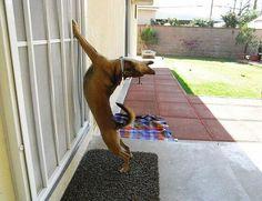25 животных, которые ну очень хотят зайти внутрь / Surfingbird - проводи время с пользой для себя!