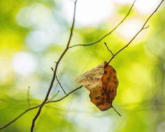 Pantone greenery art, brown and green leaves photo, chartreuse art, brown and green leaf art, leaf photo, rustic tree art, tree art, leaf by BrookeRyanPhoto on Etsy