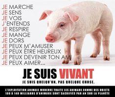 Images vegan | VEGAN FRANCE | Portail Végan / Végétarien / Végétalien