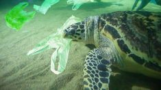 World Oceans Day: UK joins fight against plastic pollution Sky News Ocean Pollution, Plastic Pollution, Ocean Turtle, Sea Turtles, Sovereign Wealth Fund, Planet Ocean, Planet Earth, Large Scale Art, Ocean Day