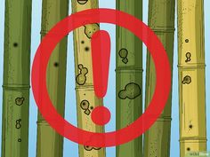 How to Cure Bamboo. Making crafts out of bamboo can be fun. However, before you can use bamboo you need to let it dry out. This process is called curing bamboo. If you leave bamboo to air dry, it can take 6 to 12 weeks. Bamboo Furniture, Cool Furniture, Furniture Ads, Office Furniture, Street Furniture, Furniture Stores, Luxury Furniture, Bamboo Poles, Bamboo Fence