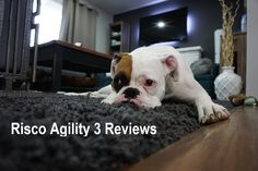 Risco Agility 3 Reviews - for the best Central Coast NSW alarm installations including the best price for the Risco Agility 3, call 282948209 or visit alarmscentralcoast.com https://www.youtube.com/watch?v=aDCbKsuGsDw