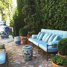 Today out back #mdsgarden #la #waitingforroger #alwayssummer #gardengreen #bluelovesgreen