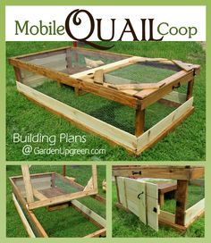 The Mobile Quail Coop - Perfect for the backyard or homestead. Raise quail for eggs, meat and enjoyment. Building plans available.