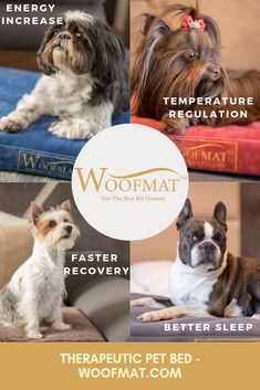 What makes Woofmat different? - It is therapeutic and orthopedic - It is water repellent - it is suitable for indoor and outdoor use - It is designed to be comfortable but also adaptable and highly portable - fits most standard size crates Dog Safe Medicine, Dog Lover Gifts, Dog Lovers, Big Dog Little Dog, Cute Dog Collars, Morning Cuddles, Dog Ages, Dog Feeding, Pet Beds