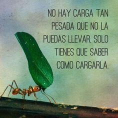 No hay carga tan pesada que no puedas llevar.... Love Life Quotes, Faith Quotes, Best Quotes, Amazing Inspirational Quotes, Inspirational Phrases, Language Quotes, Positive Phrases, Morning Greetings Quotes, Spiritual Messages