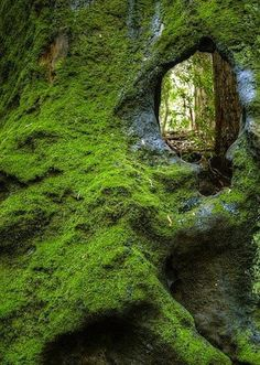 Must, Must...MUST explore....!  Moss Woman's Secret Garden