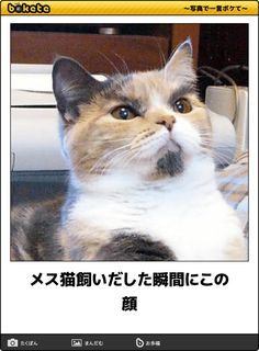 メス猫飼いだした瞬間にこの顔