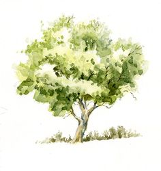 Watercolor is very nice for sketching. Here is a small crabapple tree, done with a few loose layers of watercolor paints. Simple and pleasan...