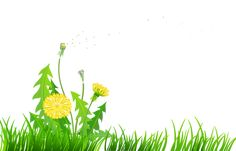 Grass with Dandelions PNG Clipart