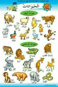 Vocabulary Pdf, English Vocabulary, Spoken Arabic, Arabic Words, Kindergarten Worksheets, Preschool Activities, Arabic Handwriting, Arabic Alphabet For Kids, Learn Arabic Online