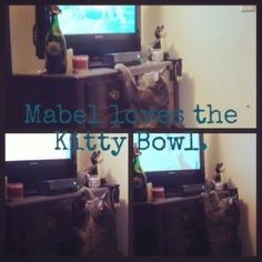 Mabel loves the Kitty Bowl on Katie Crafts; http://katiecrafts.com/