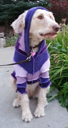 Dog's XSmall Recycled Sweater Coat Made to by CraftedByAuntyEm, $40.00