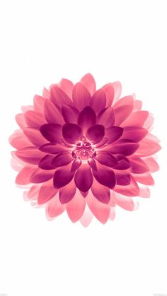 Flower ★ Find more Color Pop wallpapers for your #iPhone + #Android @prettywallpaper