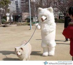 Dogs walking dogs.