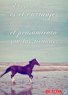 El cuerpo humano es el carruaje; el yo, el hombre que lo conduce; el pensamiento son las riendas; y los sentimientos, los caballos. #Platón #bezoya, filosofía, frase, caballo, playa