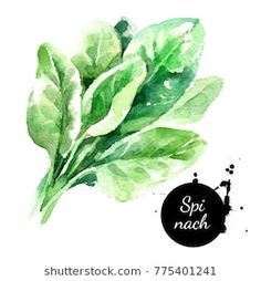 Isolated organic natural green eco food illustration on white background Watercolor Paintings For Beginners, Watercolour Tutorials, Watercolor Techniques, Watercolor Fruit, Watercolor Flowers, Kids Graphics, Pencil Shading, Food Drawing, Food Illustrations