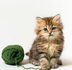 Image result for playful kittens