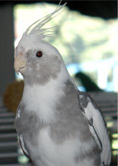 Bird Perches, Parrot Gyms, Bird Stands, PVC Car, Shower Perch Parrot Perch Diy, Bird Perch, Parrot Stand, Bird Stand, Cockatiel, Shower, Pets, Car, Animals