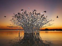 Photograph by Mike Bueno, Your Shot. Birds in the Pantanal of Mato Grosso in central-western Brazil.