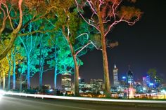 Kings Park and Botanic Garden at night