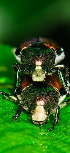 Pornographic #insects
