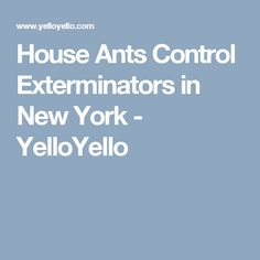 House Ants Control Exterminators in New York - YelloYello