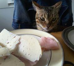 He didn't eat it :D