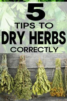 How to Dry Herbs Properly If you have an OVER abundance of herbs from your garden you can easily dry them and use throughout the coming months. Learn how to dry herbs correctly! The post How to Dry Herbs Properly appeared first on Garten. Gardening For Beginners, Gardening Tips, Gardening Quotes, Flower Gardening, Culture D'herbes, Types Of Herbs, Pot Jardin, Herb Garden Design, Home Vegetable Garden