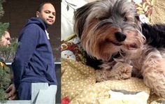 Full prosecution for Sacramento man that forced dog to sit i... - Care2 News Network