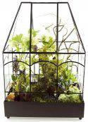 H Potter Glass Terrarium http://www.hpotter.com/terrariums/glass-terrarium-for-sale/