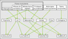 John Libbey Eurotext - Cahiers Agricultures - Évolution des recherches sur le muscle des bovins et la qualité sensorielle de leur viande I.Vers une meilleure connaissance de la biologie musculaire