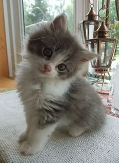 ♔ Sweet kitten