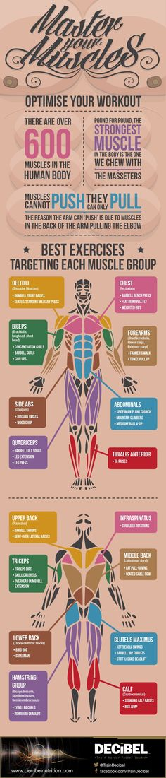 Master Your Muscles: Best Exercises For Each Muscle Group [by Decibel Nutrition™ -- via #tipsographic]. More at tipsographic.com