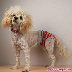 Red and Grey striped Pants slip for dogs