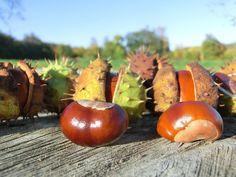 Herbstzeit = Kastanienzeit #herbst #fall #weinviertel Coconut, Landscape
