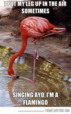 I put my leg up in the air sometimes  Singing ayo, I'm a flamingo!