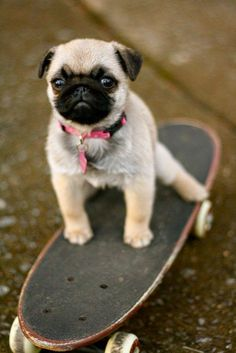 Top 5 Cutest Dog Breeds, Lets see if yours is in the list? More