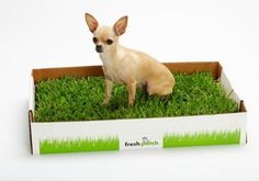 Fresh Patch~disposable doggy potty that is a 16″ x 24″ delivered to your doorstep every week. Great for apartment dwellers with small dogs or potty training with out the wee soaked wee wees! :)