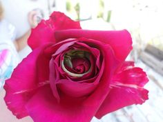 The soul is bone - Lizard nestled in a rose Photo...